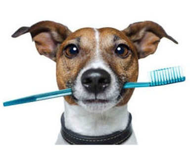 Cuidados orales y limpiezas de boca