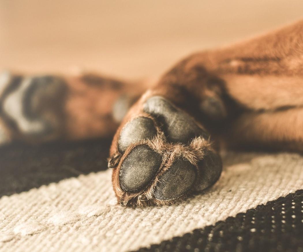 El cuidado de las uñas de tu perro