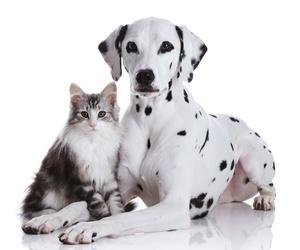 Productos y servicios para mascotas