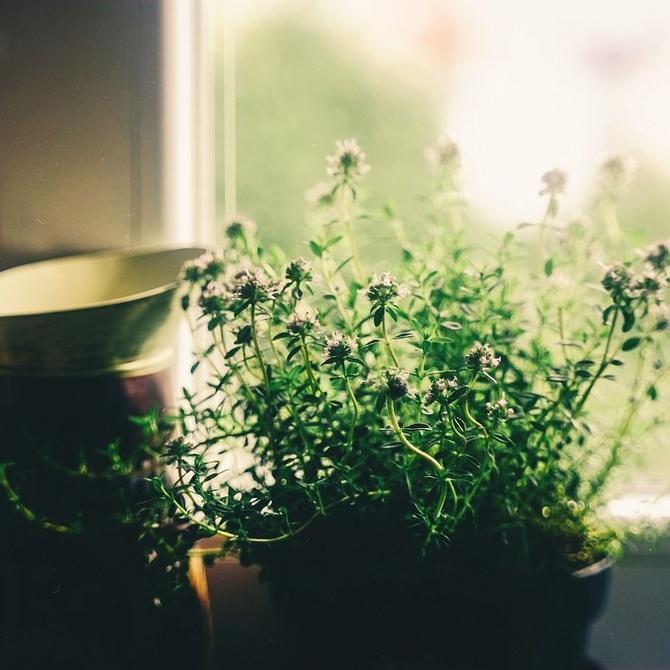 las flores no solo decoran, son beneficiosas para ti y tu familia