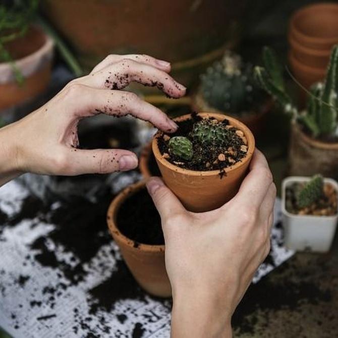 ¿Qué requisitos debe cumplir un buen jardinero?