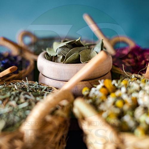 Plantas medicinales Valencia