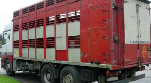 Nuestra flota: Servicios de Transportes de Animales Irazola