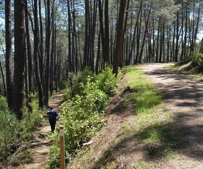 Como evitar incendios forestales
