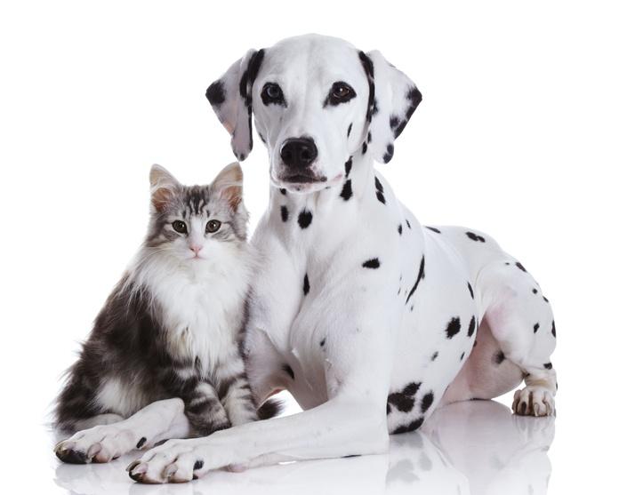 Productos y servicios para mascotas: Productos y servicios de Clínica Veterinaria Getafe