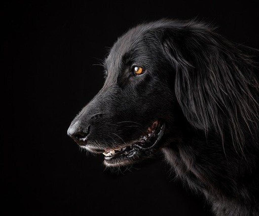 El corte de pelo de los perros