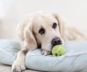 Mi perro está triste, ¿qué puedo hacer?