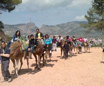 Equinoterapia: Servicios de Equitación Peluca