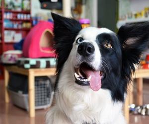 Tienda de mascotas en Terrassa