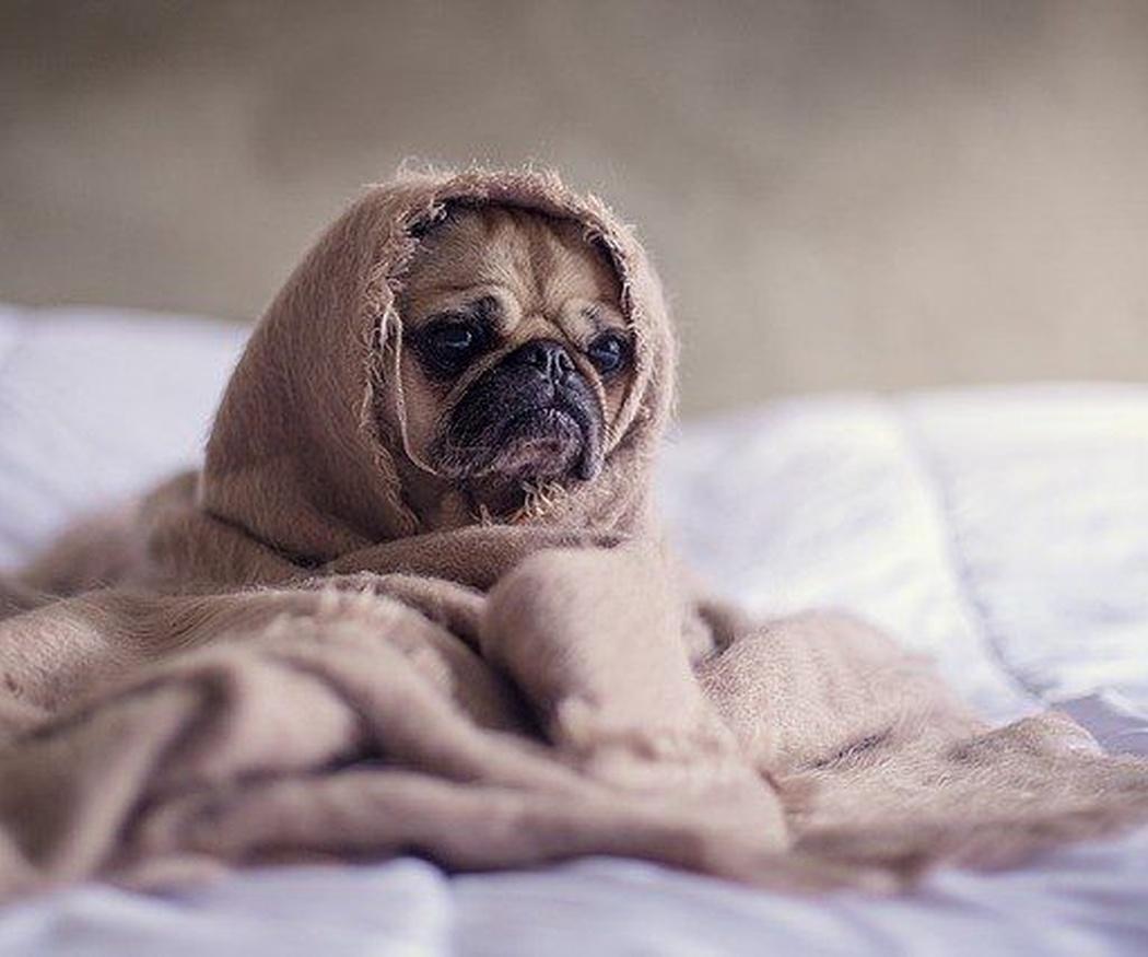 Razones comunes por las que un perro se orina en casa
