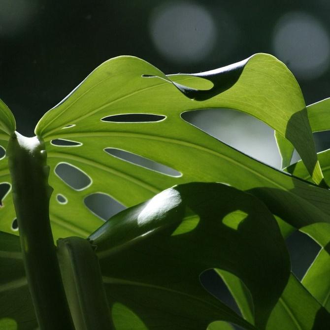 Las plantas más bonitas para jardines de interior