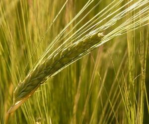 Comercialización de cereales y oleaginosas