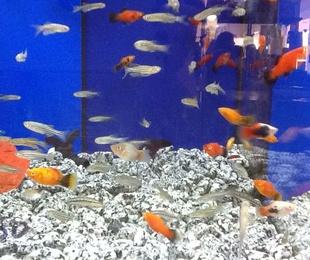 Variedad peces