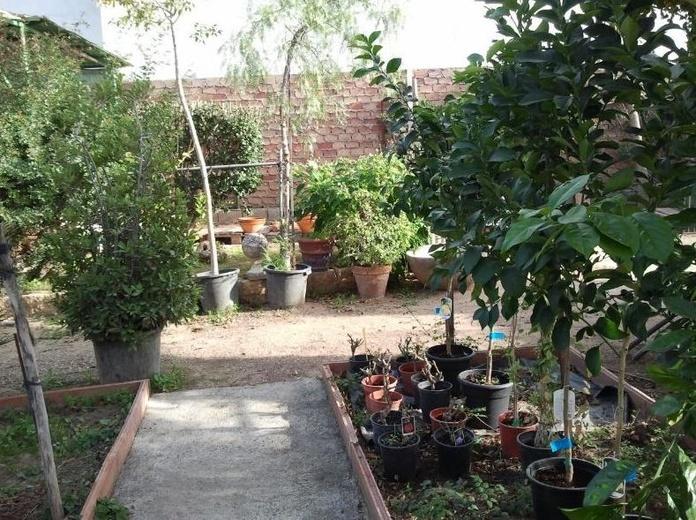 Árboles frutales y ornamentales