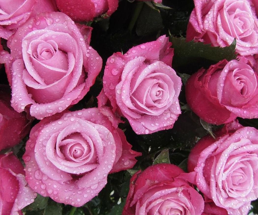 ¿Sabes por qué se regalan ramos de rosas el 14 de febrero?
