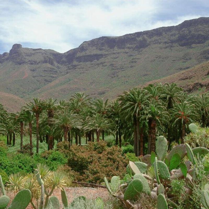 Camel Safari Park: Servicios de Casa Elisa Canarias