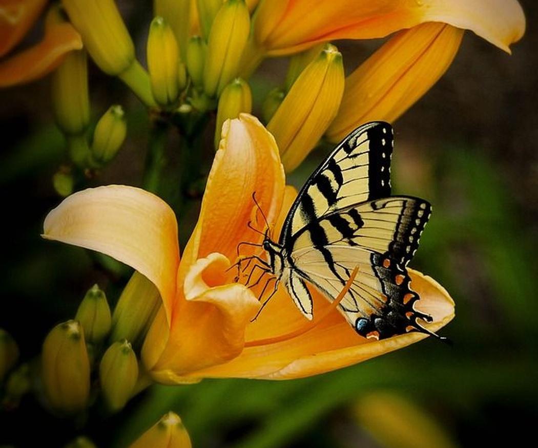 La belleza de las flores y la naturaleza