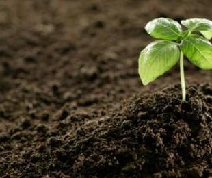 Planta y substrato