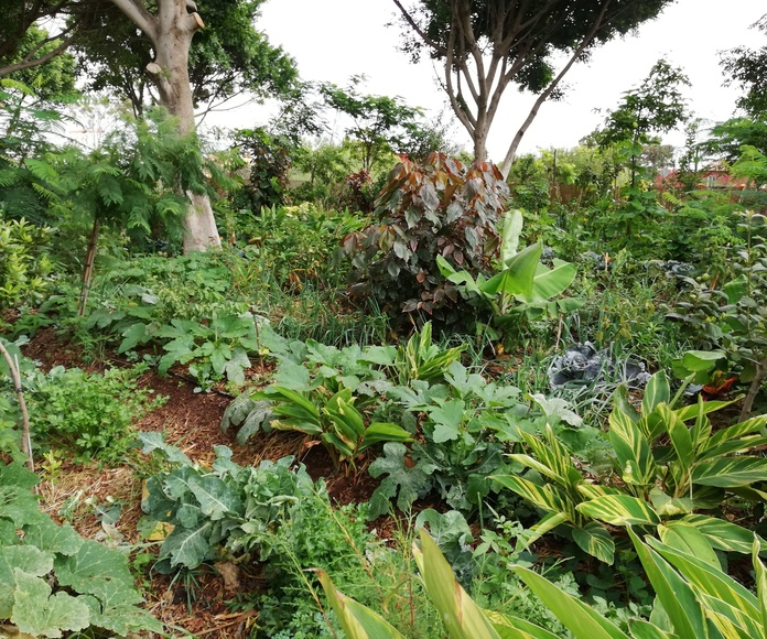 Día del árbol canario y trabajo comunitario en el Oasis del tablero. Asociación Domitila Hernández.