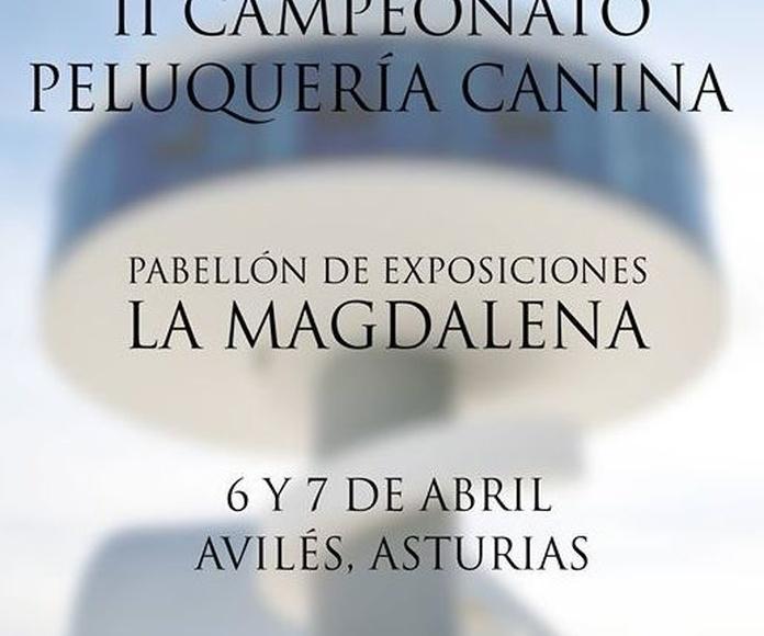 GROOMASTUR II CAMPEONATO PELUQUERÍA CANINA