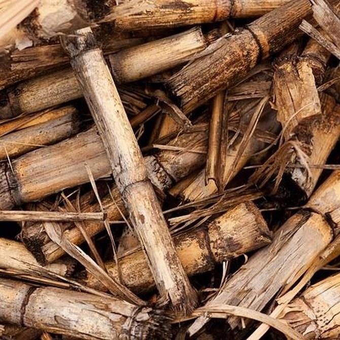 Las calderas de biomasa
