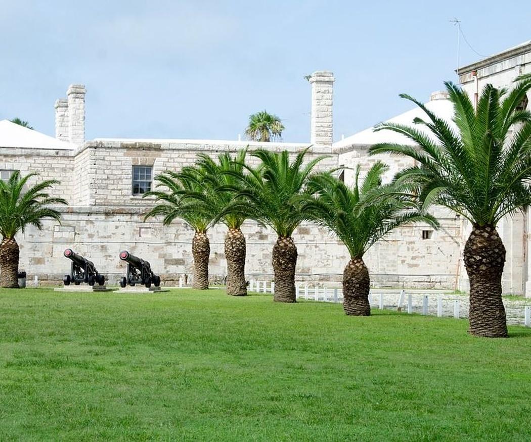 ¿Qué tipos de palmeras se usan más en los jardines?