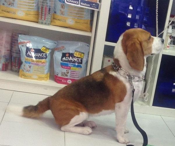Estética y cosmética canina en Madrid