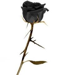 Rosas liofilizadas: Catálogo de Garden Rivas Flores y Plantas