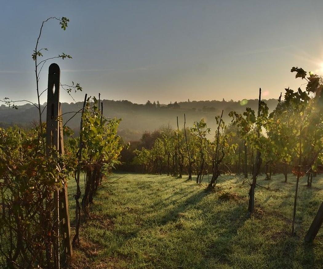 Historia de la vid y el vino