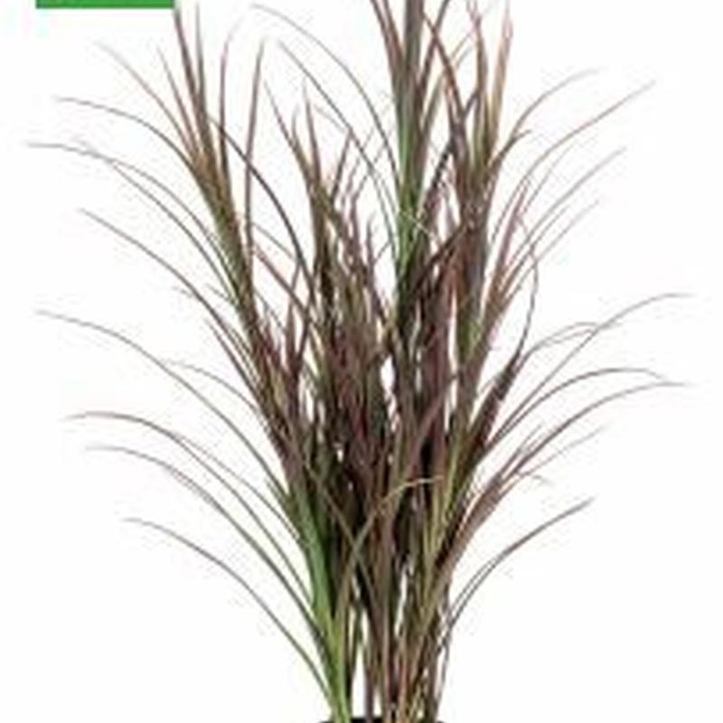 Arbusto tipo junco: ¿Qué hacemos? de Ches Pa, S.L.