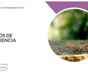 Control de plagas en Móstoles | Equiluz