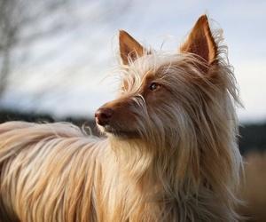 Pasear a tu perro junto a una manada mejora sus habilidades sociales