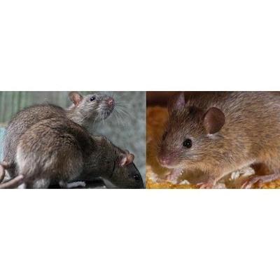 Control de plagas : CAT-H2O - Control de Plagas Urbanas y Legionella