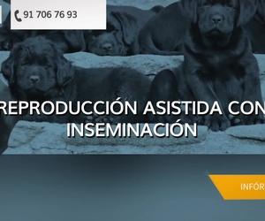 Veterinarios en Madrid | Centro Veterinario Aluche Las Águilas