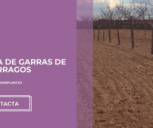 Siembra de espárragos en Granada | Viveros Hortplant, S.L.