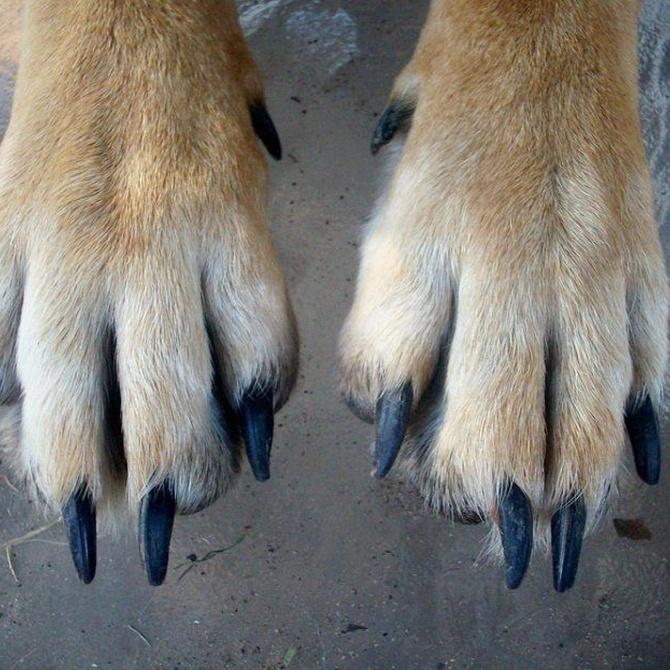 Algunos consejos para el cuidado de las uñas de tu perro