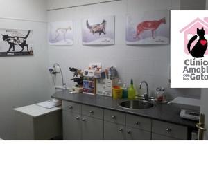 Clínica veterinaria de Gatos en Bilbao