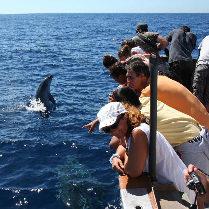 Avistando un delfín mular