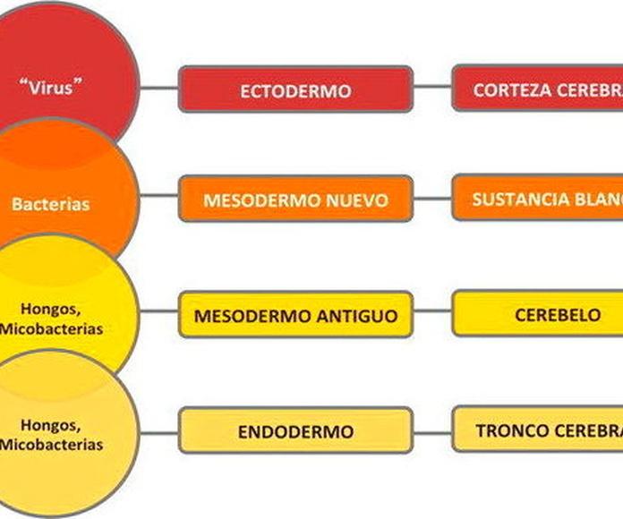 Seminario Kinesiología Energética Integrativa. Sábado 18 de Mayo.. De 11h a 20h.Centro Do-Valencia