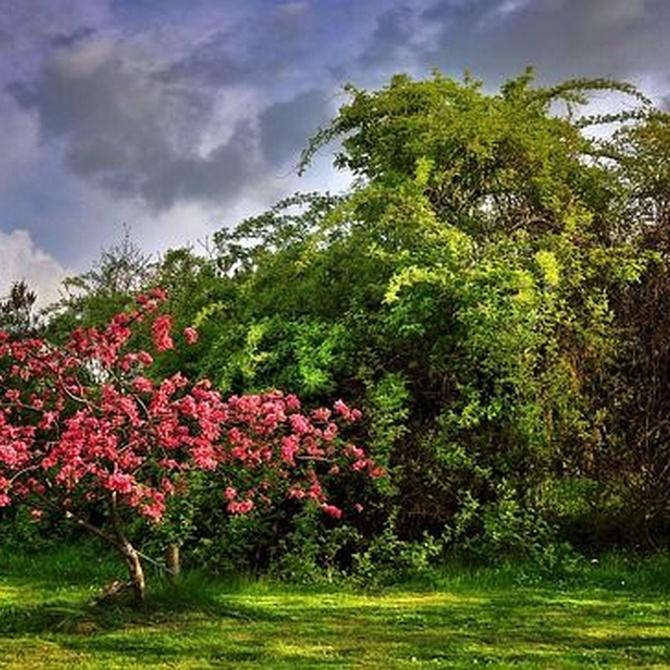 Beneficios y riesgos al momento de podar nuestro jardín
