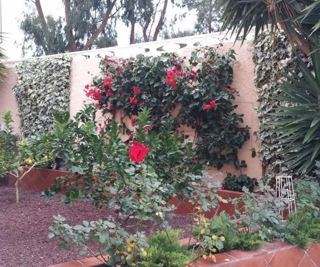 Cómo hacer de tu jardín un espacio más sostenible