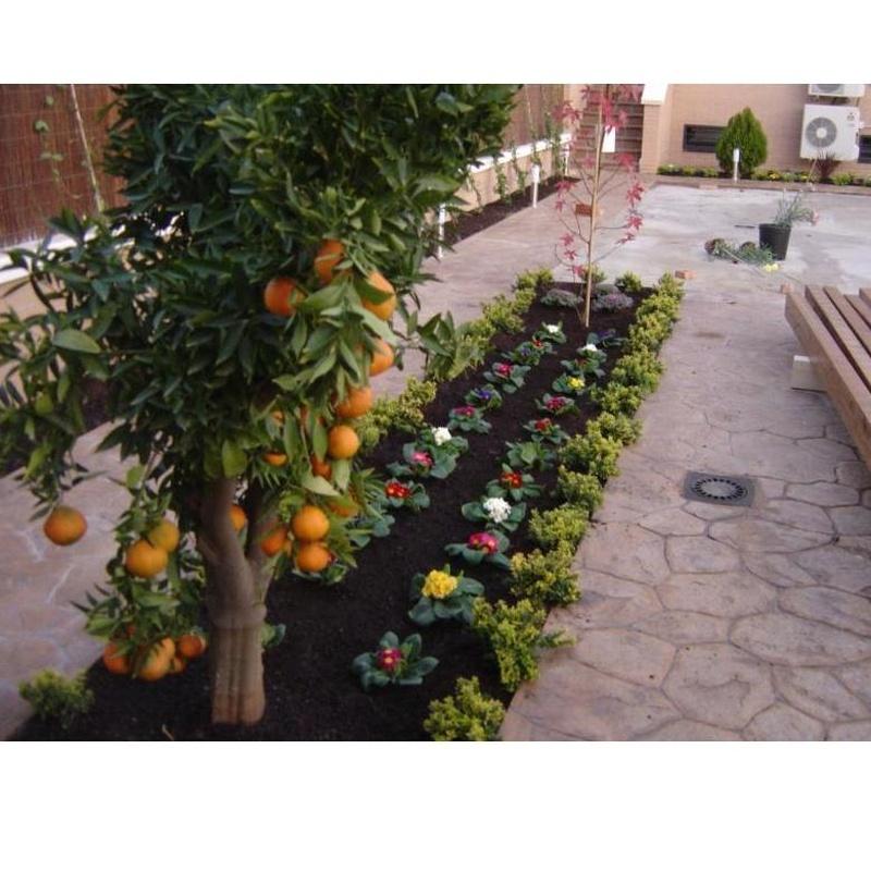 Pulgón y cochinilla frutales y arbustos