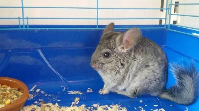 Roedores: Productos de Avifauna Tienda Animal