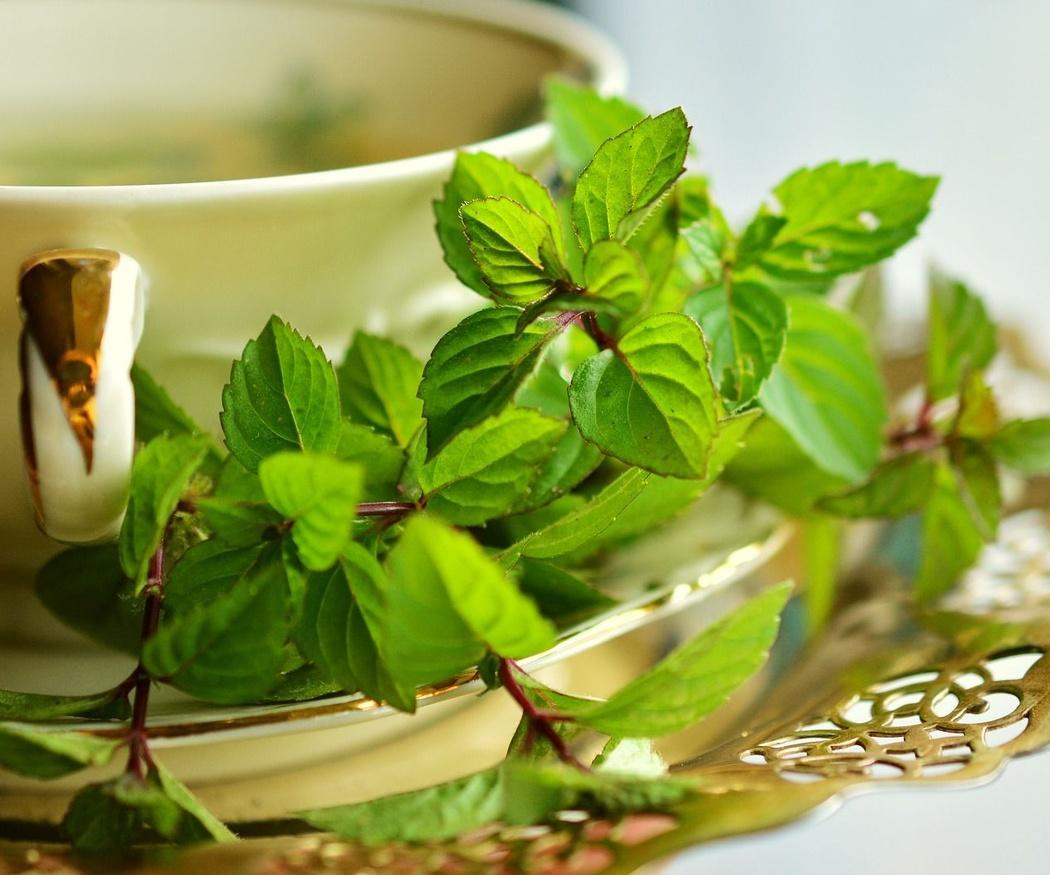 Historia de las plantas medicinales
