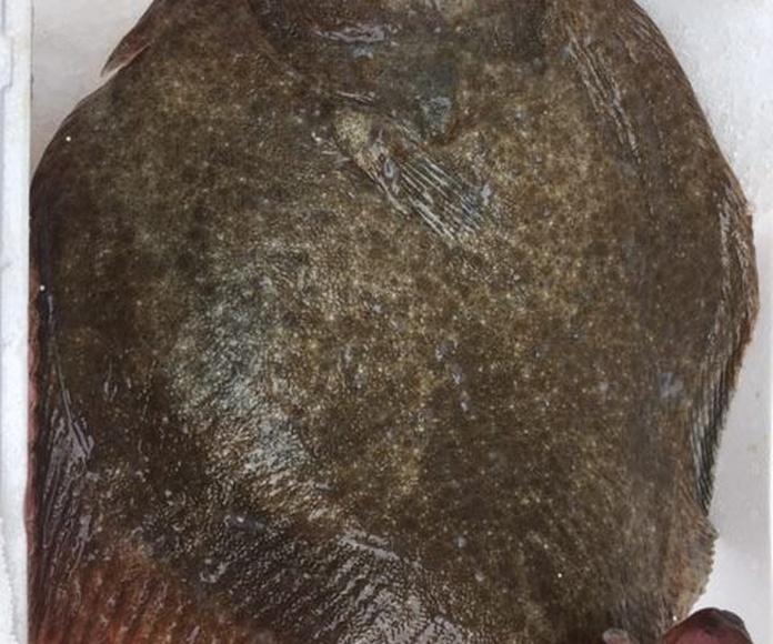 Distribución de pescados y mariscos: Servicios de Pulpeiros de Galicia (IBIZA)