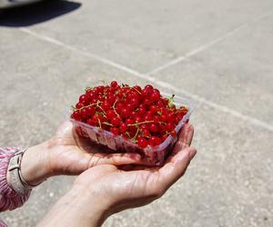 Arándano rojo, un antioxidante natural