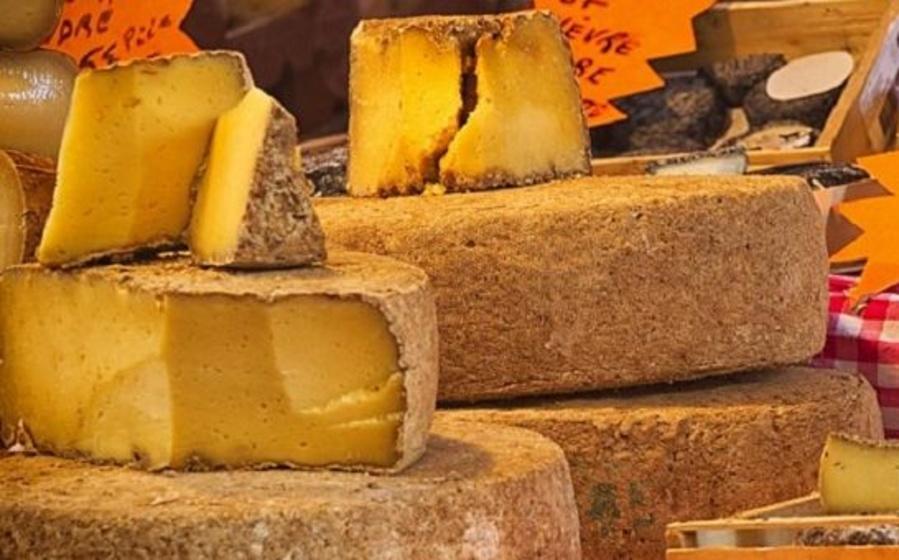 La raza Salers y la elaboración del tradicional queso Cantal