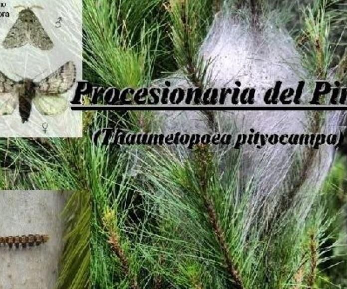 Prevención Procesionaria