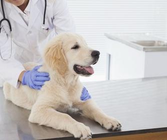 Identificación animal: Servicios  de Centro Veterinario Bienestar Animal Almerimar