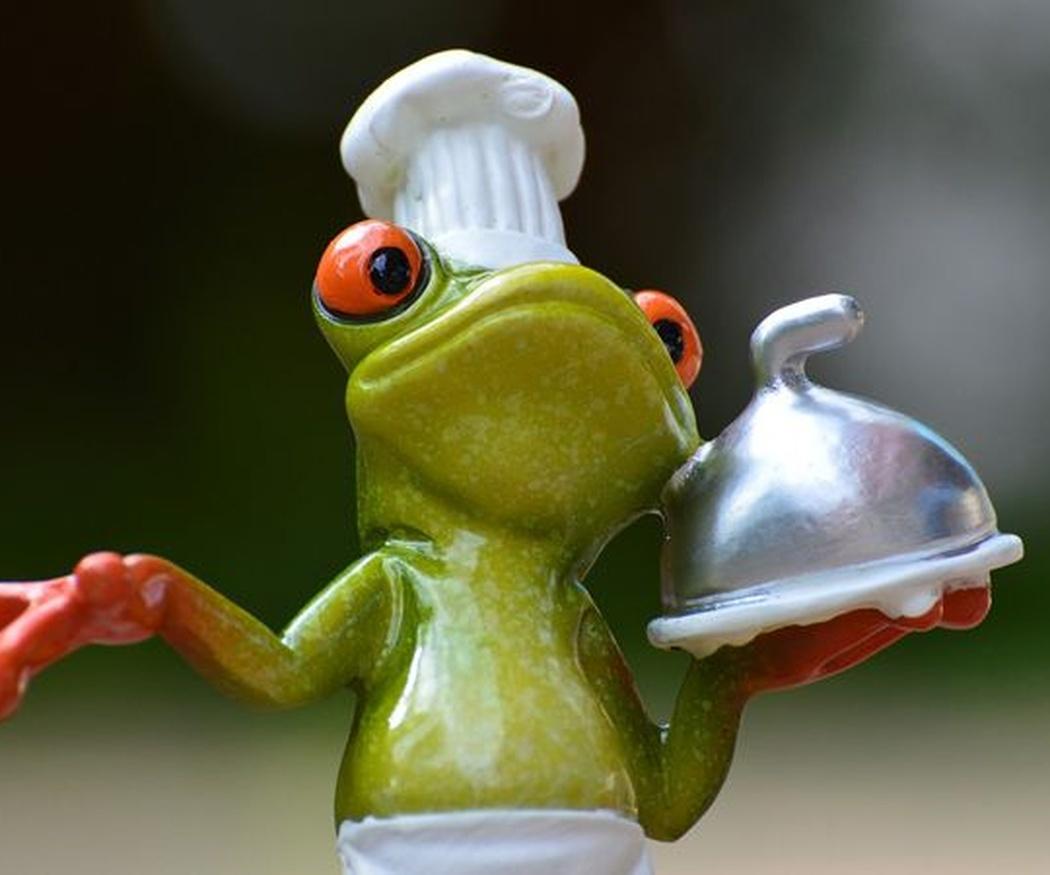 La rana y su alimentación
